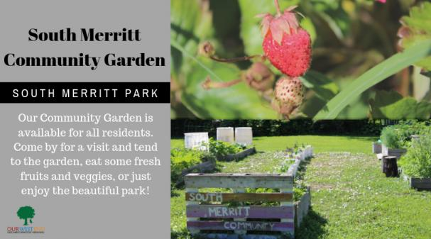 South Merritt Community Garden Is Open!