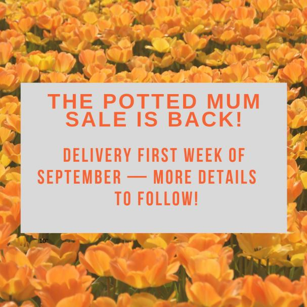 Potted Mum Sale Is Back!